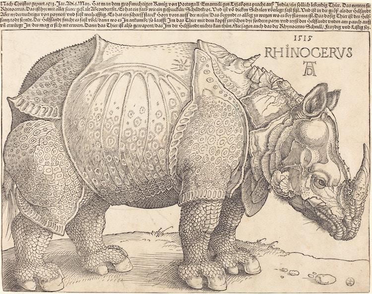 Rhinoceros Engraving by Albrecht Durer