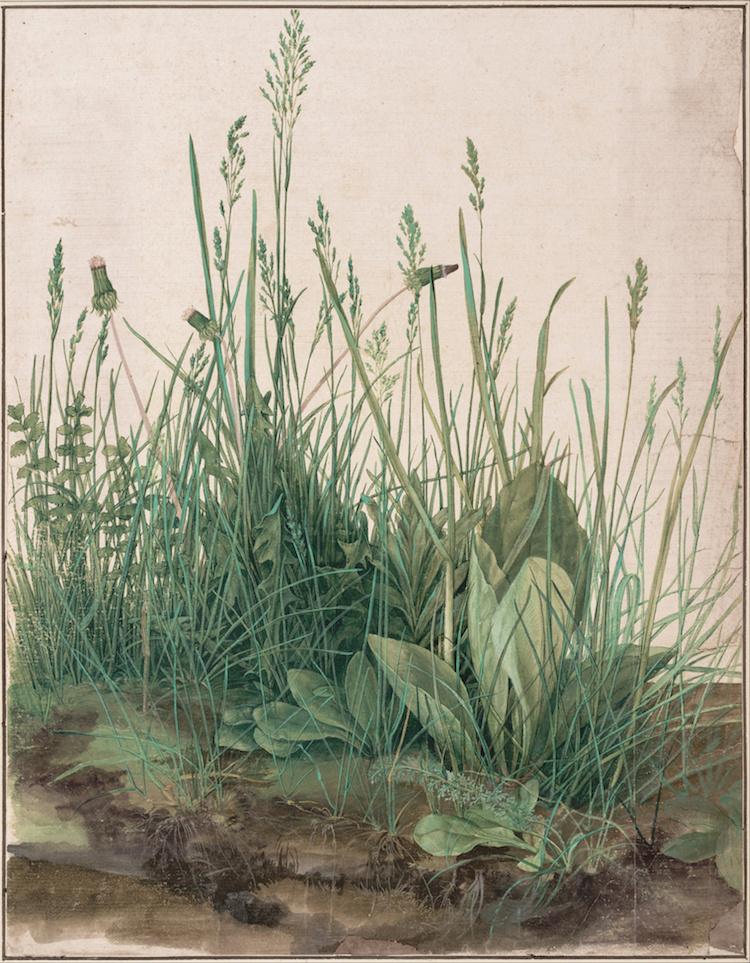 Watercolor Painting by Albrecht Durer